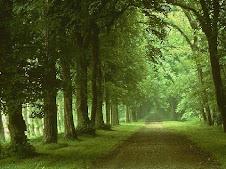 21 Set - Dia da Árvore