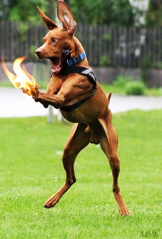 Dog+Funny+Photoshop+mrm.jpg