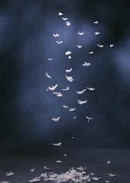 羽毛--3