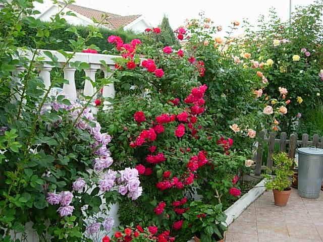 En tu jard n rosales for Jardin los rosales