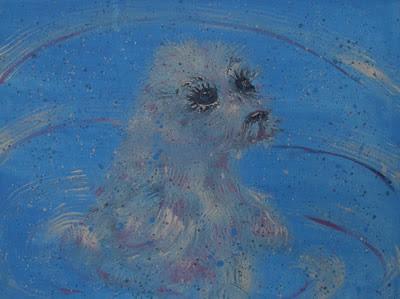 Little white fluffy seal