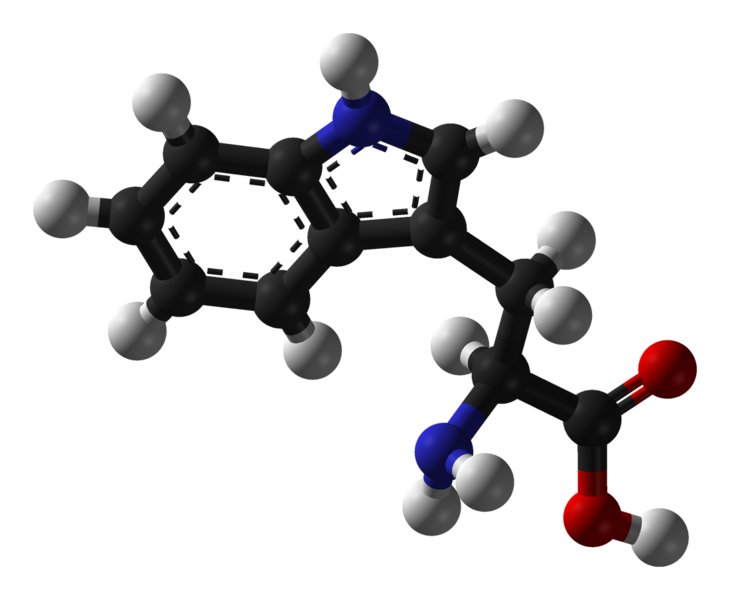 730px L tryptophan 3D balls Protein rich foods contain high amounts of L tryptophan.