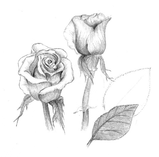 Pencil Flower Drawing. Use a 2H pencil for this step.