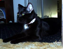The New Cat, Midnight