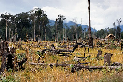 This picture shows destructed rainforest on which very soon new farm