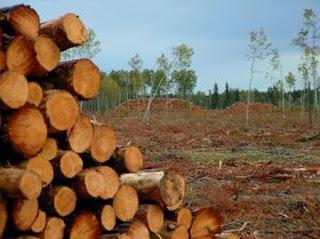 external image amazon_deforestation_not_slowing.jpg