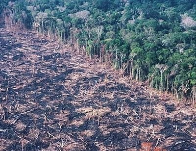 why are rainforests so important It is an important concept to understand, however, so that one may realize why cutting down tropical rainforests is as harmful to us as the experts say it is adding more carbon to the atmosphere gases causes an effect similar to a greenhouse.