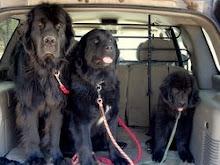 Rubee, Bella and Tucker