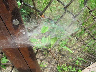 web at the trinity river audubon center