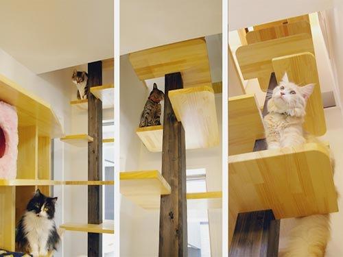Designerwohnung f r katzen heulnicht - Kletterwand katze ...