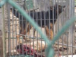 Relación de algunas de las perreras atroces en España (enlace)