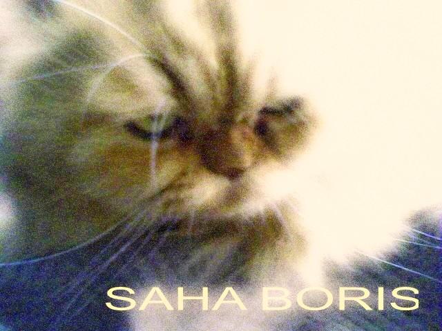 SAHA BORIS