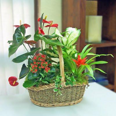 Feng shui las plantas en el feng shui su papel en la for Plantas entrada casa segun feng shui