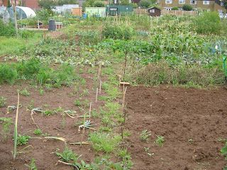 old allotment