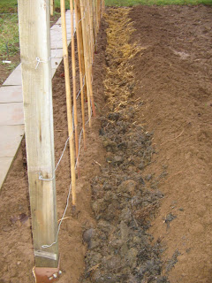 runner bean manure trench