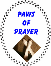 Paws of prayer for all our furiends in need
