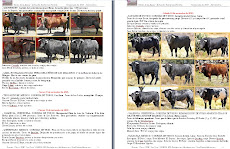 """""""NOTAS DE LA FIESTA"""" EN PDF"""