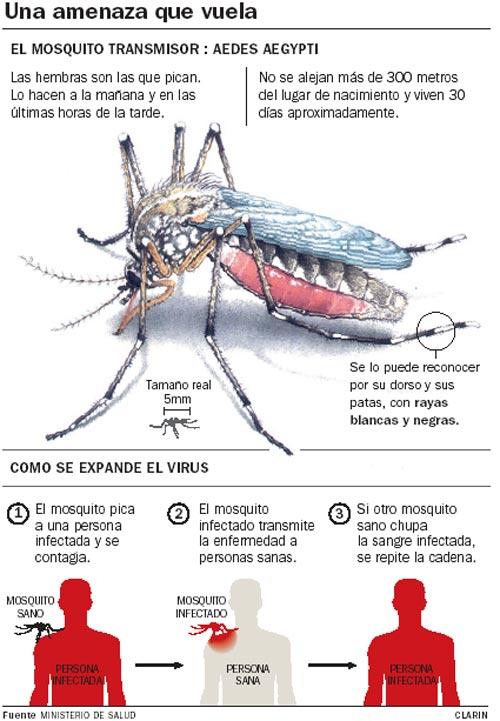 Campa a para erradicar el dengue del c a i e como se - Como eliminar los mosquitos de mi casa ...