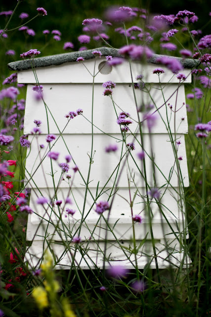 beehive gardening
