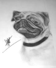 Mops drawing