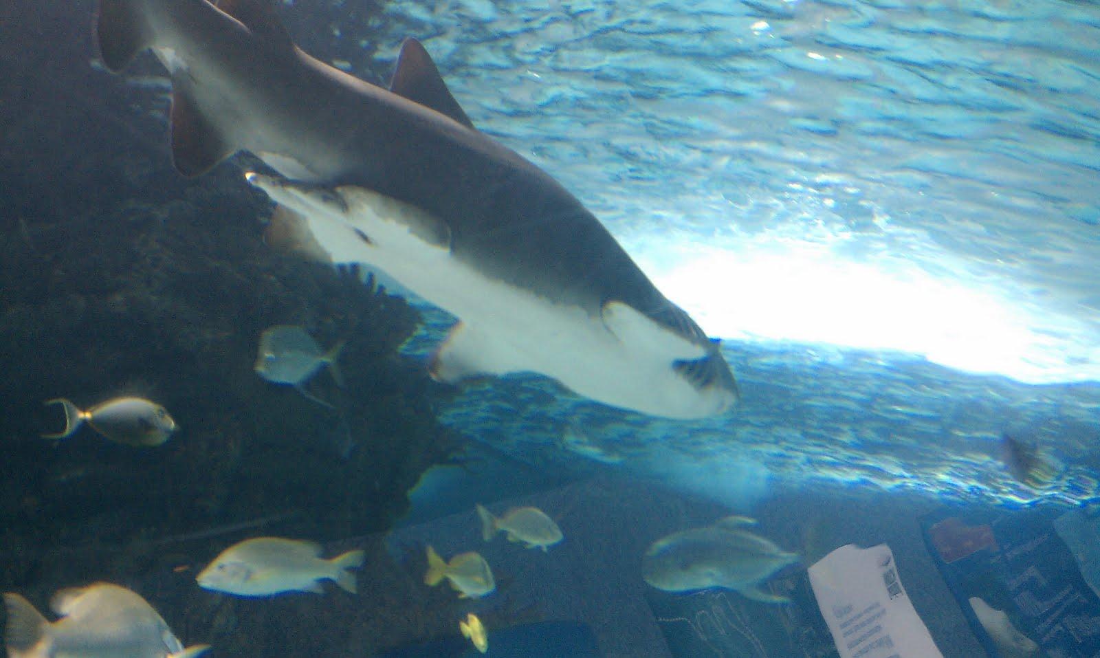 Pooled Reflections Newport Aquarium Cincinnati Ohio