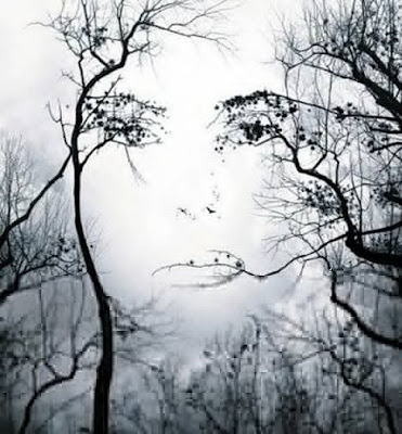 Face appears in trees illusion