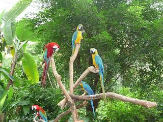 Parrots in the Singapore Bird Park