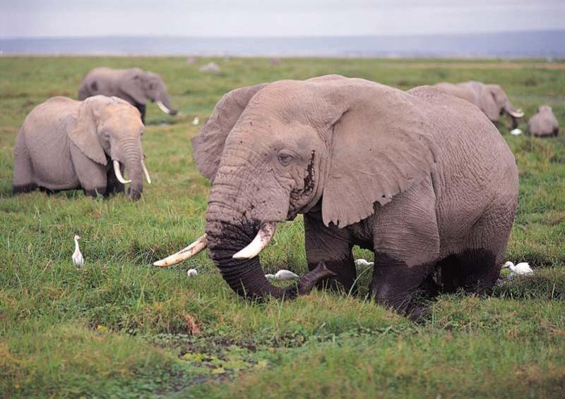 iki kişilik çılgın filler oyunu fulll