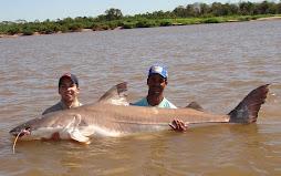 Peixes do Rio Araguaia