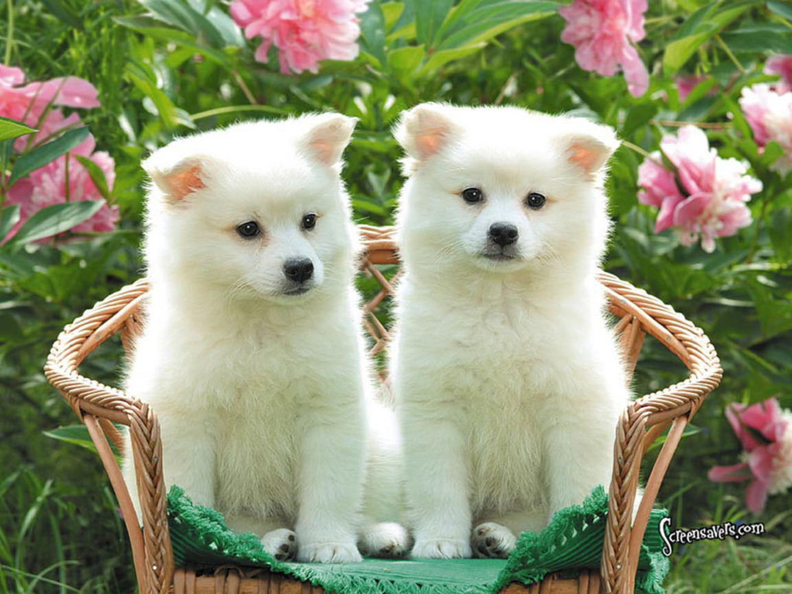 Nice pictures cute puppies
