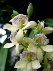 Ahh, Orchids how beautiful you are...