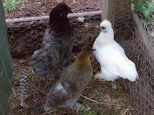 Japanese Silkies from Elayne!