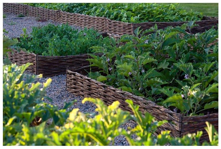 Copy & Paste: Jardim de hortali?as