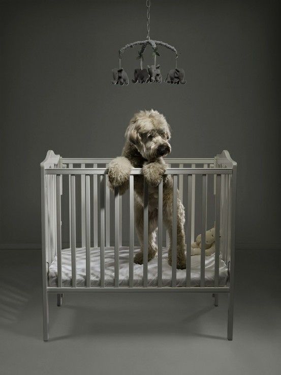 juicy dog couture  dog in crib