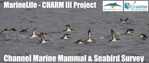 Marinelife: Channel Marine Mammal & Seabird Survey