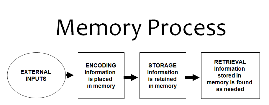 memory the relationship between encoding and retrieval Label and review the principles of encoding, storage, and retrieval  for  instance, you might link the cognitive school to structuralism because both were.