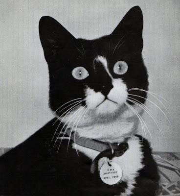Саймон - военно-морской кот, служивший на британском сторожевом корабле...