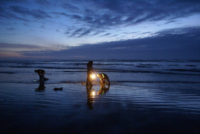 Three people digging clams during a low tide on a beach in Washington state.