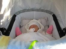 Lilla V - 6 veckor gammal