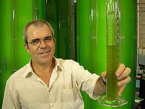 BIOCOMBUSTUBLES: Las algas y el  biopetróleo