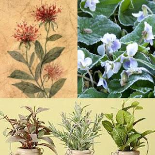 herb_plants