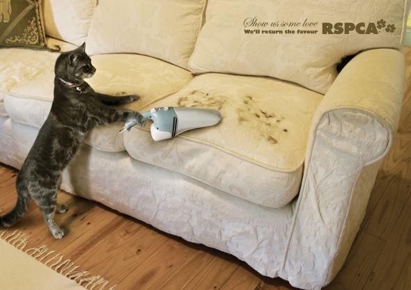 RSPCA-Cat-funny-ad39