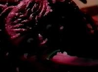 medusa like