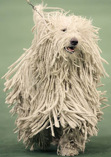 I hate this mop dog