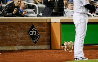 what is with these fuckin cats at Shea Stadium and CitiField?