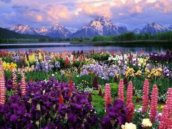 Naturaleza y Medio Ambiente: Power Point de Naturaleza