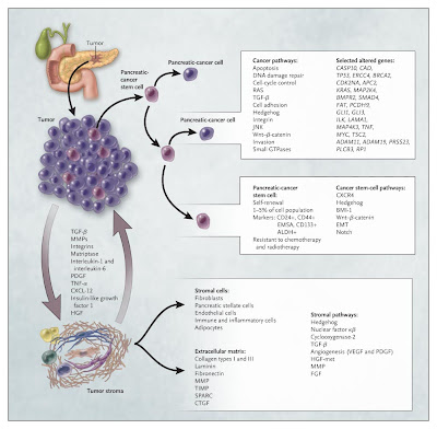 The biology of pancreatic cancer