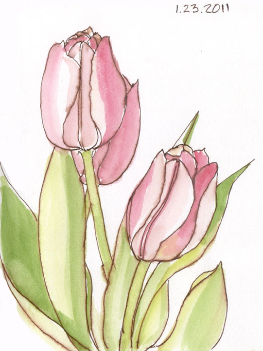Gallery For gt Sketches Of Tulips