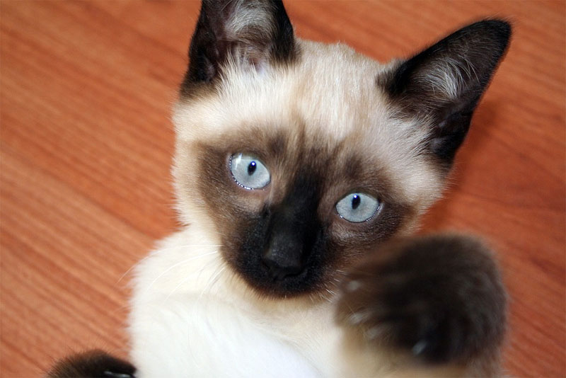 Cat  Pws