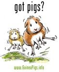 Proud Guinea Pig Owner